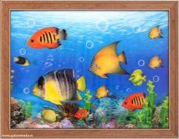 Картина 5D 30х40 246 Рыбки / ZR8210H-222411/