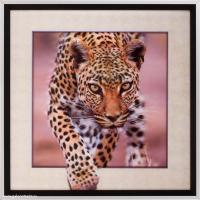 Картина 5D 40х40 002 Гепард / 2002B-012C /